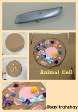 A snapshot of supplies used to make a cross section of an animal cell
