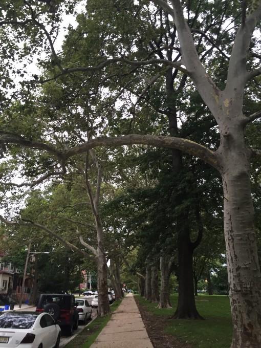 Trees in Clark Park